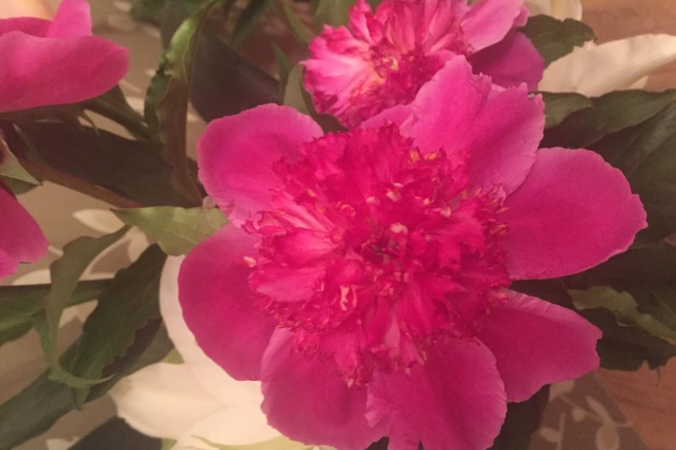 La Vie En Rose  バラ色の人生
