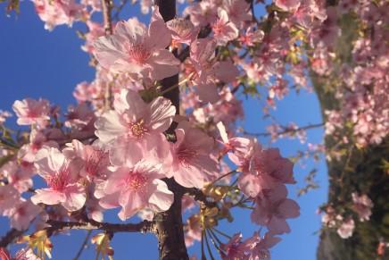 期間限定 春の乙女コース